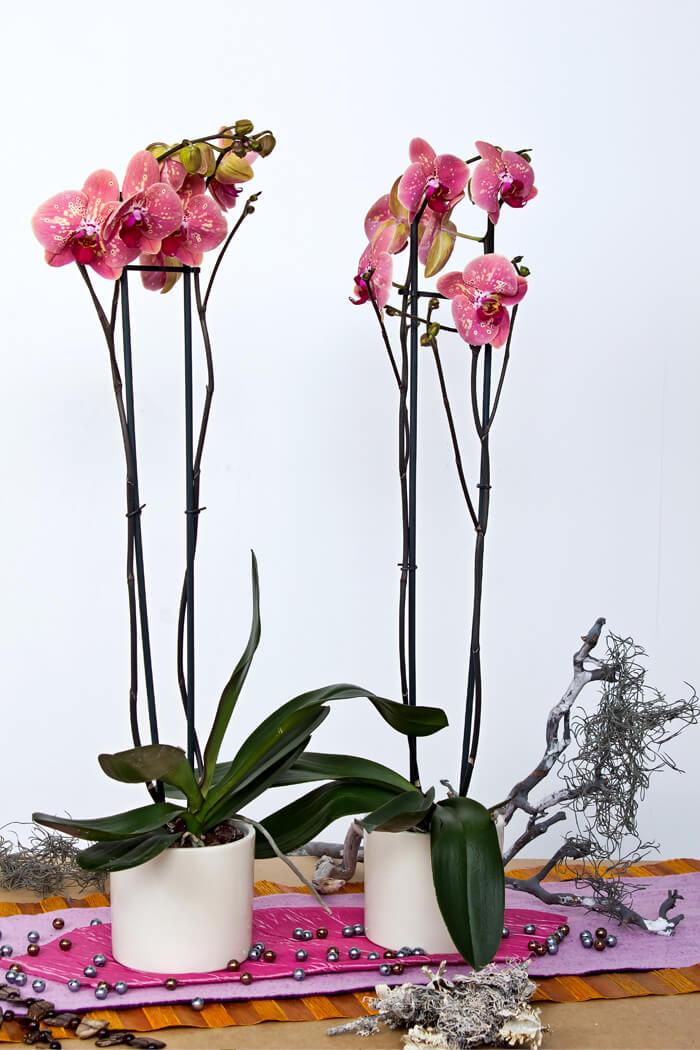 Baumschule, Floristik, Blumen, Pflanzen, Sämereien, Gartenzubehör ... Probleme Mit Den Pflanzen